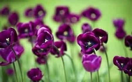 actualit vie des etablissements journe vert et violet mardi 31 janvier 2017 - Vert Et Violet